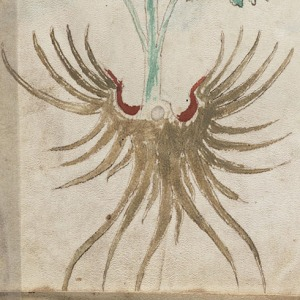 Figure 18. Hidden eagle in the roots of f46v.