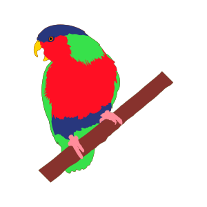 Lorini bird